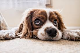 Image result for cartoon puppy dog eyes gif