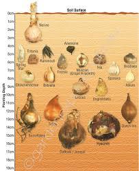 Bulb Identification Planting Depth Guide Garden Express