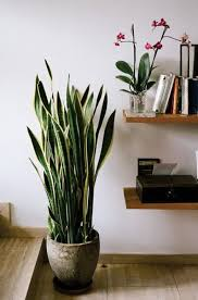 Best Indoor Plant Design