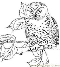 Small Picture Bengalese Eagle Owl Coloring page Pinterest Owl