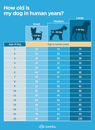 Longest Living Dog Breed Chart The 15 Longest Living Dog Breeds With The Highest Lifespan