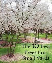 Best 25+ Front Yard Tree Ideas Ideas On Pinterest | Landscaping ...