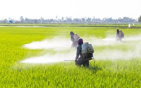 Paraquat Weed Killer Linked to Parkinson's Disease - Seeger Weiss LLP