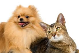 Image result for Canines and Cats