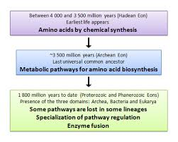 Amino Acid Translation Chart Amino Acids Evolution Learn Science At Scitable