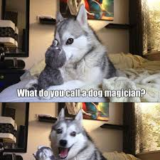 Pun Dog Strikes Again by dreaddy - Meme Center via Relatably.com