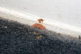 bingham pest control. Modren Bingham Signs Of Drywood Termites Tampa Bay Florida Binghamu0027s Professional Pest  Management Has Provided West Central  To Bingham Control S