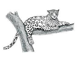 Jaguar Coloring Pages Print Out Jaguar Coloring Pages