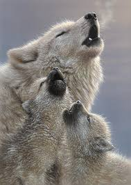 gray wolf pups howling. Unique Pups Wolf Mixed Media  Pups Howling Singing Lesson By Collin Bogle For Gray N