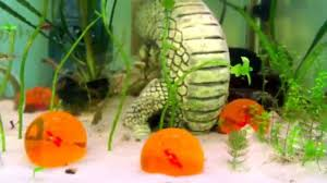 Dragon Ball Z Decorations Dragon Ball Z themed Aquarium YouTube 36