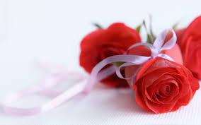 Red Flower Wallpaper Red Flower Wallpaper High Resolution Hd Wallpaper Wiki