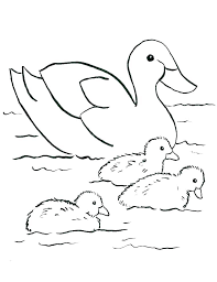 Coloring Page Of A Duck Advocacyhubinfo