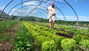 organic farming hobby farms certified organic farm