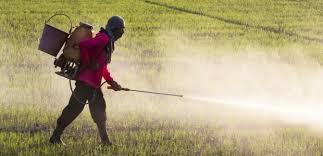 The Hidden Dangers Of Chemical Fertilizers Environmental