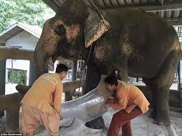 Elephant fucking girl free