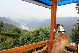 10 Pet-Friendly Hotels In India For A Vacation With Your Pet
