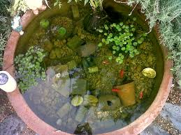 diy patio pond: this is my pond we have five goldfish lucky finny
