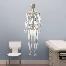 Chiropractic Wall Charts Anatomical Wall Charts Medical Wall Decals From Fathead