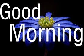 Good Morning Flower Images Free ...