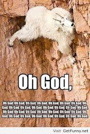 Funny mountain goat - Funny Pictures, Funny Quotes, Funny Memes ...
