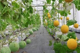 SmartAgri: Giải pháp quản lý nông nghiệp thông minh