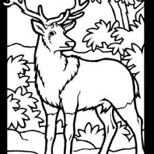 Small Picture Mule Deer Coloring Pages Free Coloring Pages Deer Coloring Sheets