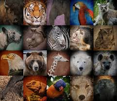 essay endangered wildlife in ibps po vii and clerk vii e ndangered species is the second most severe conservation status for wildlife in the international union for conservation of nature iucn red data book