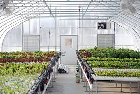 rooftop greenhouses and urban farming