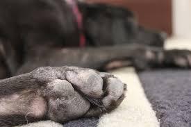 10 Remedies To Help Alleviate Dog Skin Problems