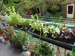 blooming your balcony gardening tips for apartment and condo dwellers april 2016 toronto