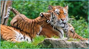 Wallpapers Nature Animals HD ...