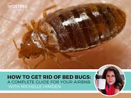 How to Get Rid Of Bed Bugs: A Complete Guide For Your Airbnb