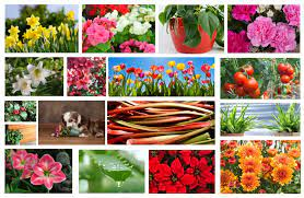 toxic plants to avoid if you have pets