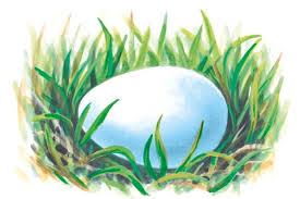 Egg Identification Chart How To Identify Birds Eggs Bird Egg Identification
