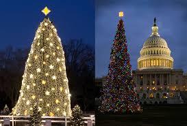 Dc White House Christmas Tree Lighting The White House Christmas Tree Vs Congresss Tree Which Is