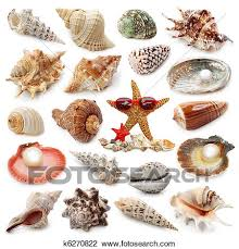 Seashell Collection Stock Image K6270822 Fotosearch