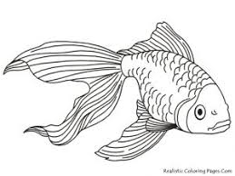 Fish Coloring Pages For Adults Free Free Coloring Book
