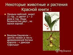Презентация на тему Красная книга Мы друзья природы Богданова  10 Некоторые животные и растения Красной книги