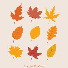 Fall Images Free Fall Vectors Photos And Psd Files Free Download