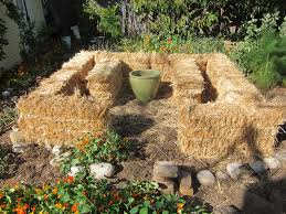 our new straw bale garden part i root
