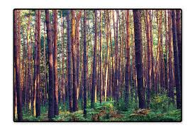 Morning Light Amazon Amazon Com Stain Resistant Rug Forest In The Morning Light