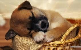 educazione cucciolo, comprare cucciolo, puppyclass,cuccia