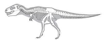 Small Picture Tarbosaurus Melbourne Museum