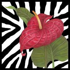 <b>Zebra</b> Anthurium by Stephanie Stouffer   Ruth Levison Design ...