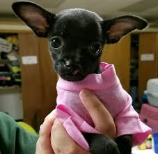 with cleft lip to play in puppy bowl
