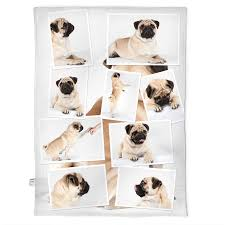 photo blanket with a mone of photos of the same dog