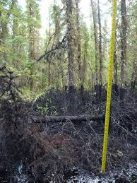 underground oil spills in alberta continue to poison land com photo from cnrl shows oil level over 2 feet high must credit cnrl