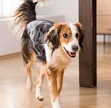 So sind beispielsweise behandlungen, von denen sie. Die Hundehalterhaftpflichtversicherung Von Petprotect Jetzt Abschliessen