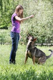 Teen girl on dog