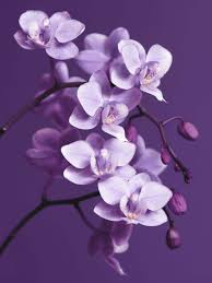 on purple orchid wall art with graham brown purple orchid wall art house of fraser